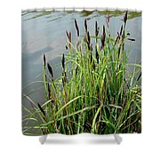 Grasses With Seed Heads Shower Curtain