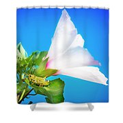 Grasshopper And Blue Sky Shower Curtain