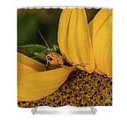 Grasshopper In Sunflower Shower Curtain