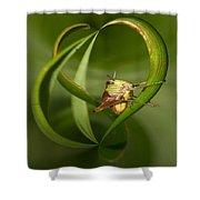 Grasshopper Twist Shower Curtain