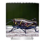 Grasshopper Nymph Shower Curtain