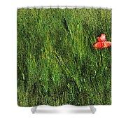 Grassland And Red Poppy Flower 2 Shower Curtain