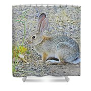 Grassland Youngster Shower Curtain