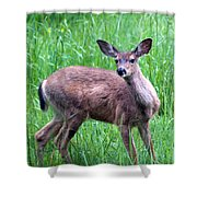 Grassy Doe Shower Curtain