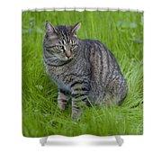 Gray Cat In Vivid Green Grass Shower Curtain
