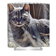 Gray Cat In Woods Shower Curtain