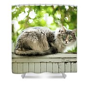 Gray Cat Sitting On A Balcony Shower Curtain