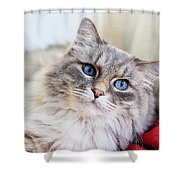 Gray Cat With Green Eyes Shower Curtain