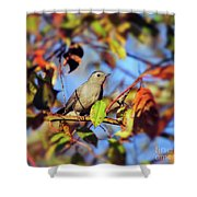 Gray Catbird Framed By Fall Shower Curtain