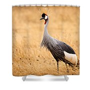 Gray Crowned Crane Shower Curtain
