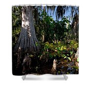Gray Cypress Shower Curtain