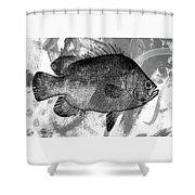 Gray Fish Shower Curtain