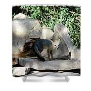 Gray Fox 4 Shower Curtain