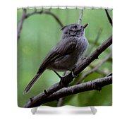 Gray Grey Bird 052814a Shower Curtain