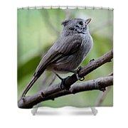 Gray Grey Bird 052814aa Shower Curtain