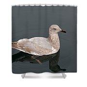 Gray Gull Reflection Shower Curtain