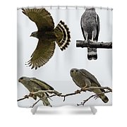 Gray Hawk Collage Shower Curtain