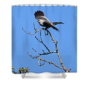 Gray Hawk Retreat Shower Curtain
