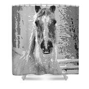 Gray Horse Shower Curtain