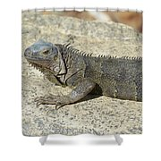 Gray Iguana With Long Talons Sitting On A Rock Shower Curtain