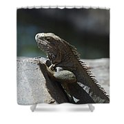 Gray Iguana With Spines Along His Back On A Rock Shower Curtain