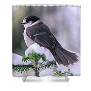 Gray Jay Shower Curtain