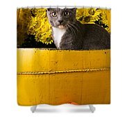 Gray Kitten In Yellow Bucket Shower Curtain