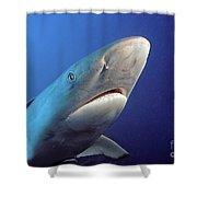 Gray Reef Shark Shower Curtain