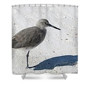 Gray Sandpiper On White Beach Shower Curtain