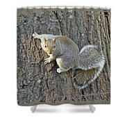 Gray Squirrel - Sciurus Carolinensis Shower Curtain