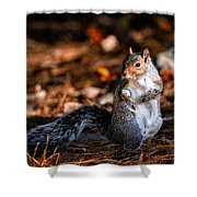 Gray Squirrel Dance Shower Curtain