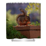Munching Squirrel Shower Curtain