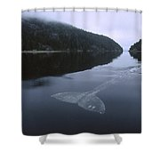 Gray Whale Clayoquot Sound Shower Curtain