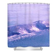 Gray Whale  Shower Curtain