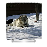 Gray Wolf 3 Shower Curtain