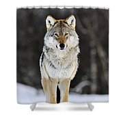 Gray Wolf In The Snow Shower Curtain