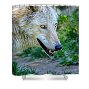 Gray Wolf Shower Curtain