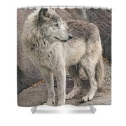 Gray Wolf Profile Shower Curtain
