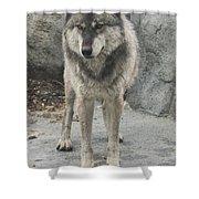 Gray Wolf Stare Shower Curtain