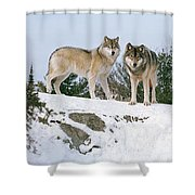 Gray Wolves Canis Lupus In A Forest Shower Curtain