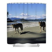Gray Wolves On Beach Shower Curtain