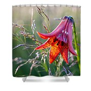 Gray's Lily Roan Mountain Highlands Shower Curtain