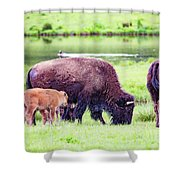 Grazing Bisons Shower Curtain