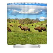 Grazing Buffalo Shower Curtain