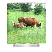Grazing Cow And Calf Shower Curtain