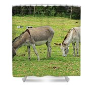 Grazing Donkeys Shower Curtain