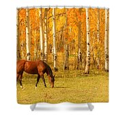 Grazing Horse In The Autumn Pasture Shower Curtain