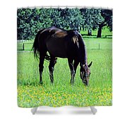 Grazing Horse In The Flowers Shower Curtain
