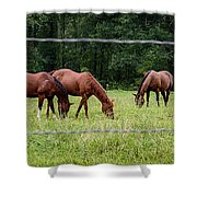Grazing Horses - Cades Cove - Great Smoky Mountains Tennessee Shower Curtain