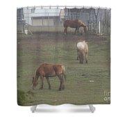Grazing Horses Shower Curtain